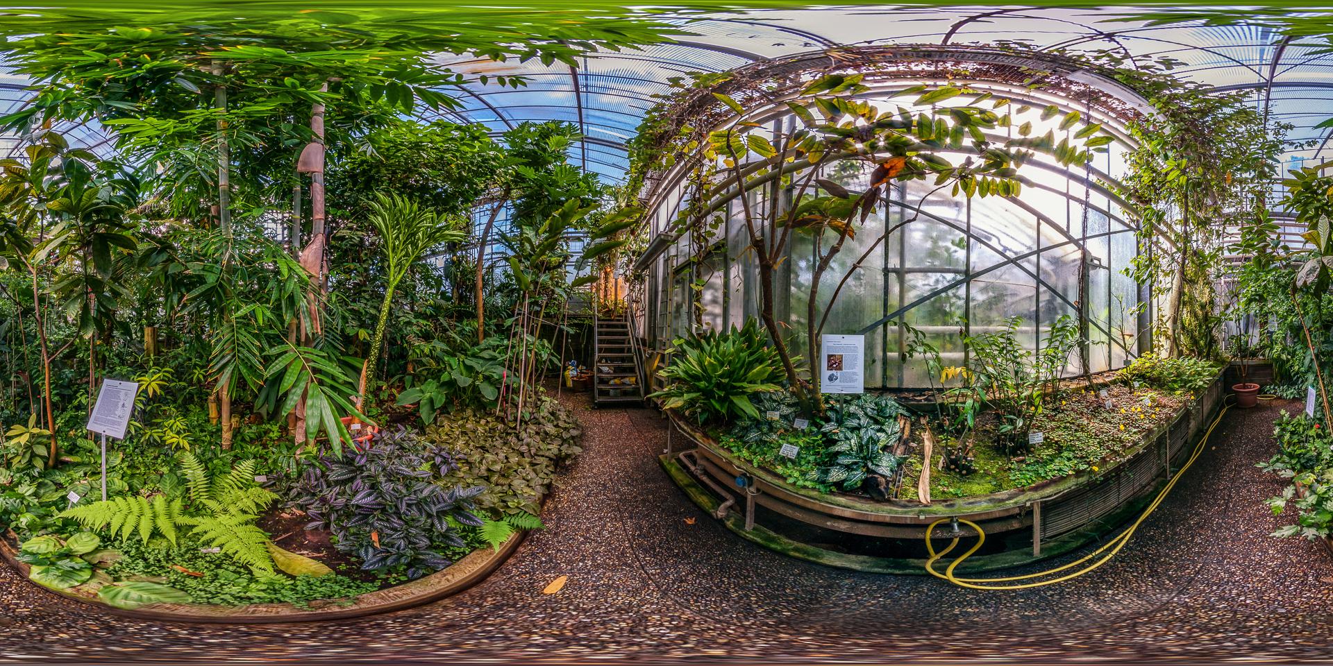 Botanischer-Garten-Darmstadt-Tropenhaus