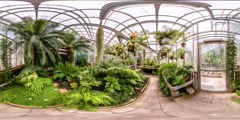 Botanischer-Garten-Giessen-Farne