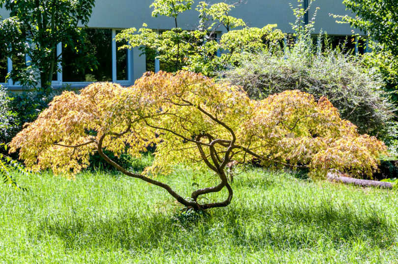 Botanischer-Garten-Heidelberg