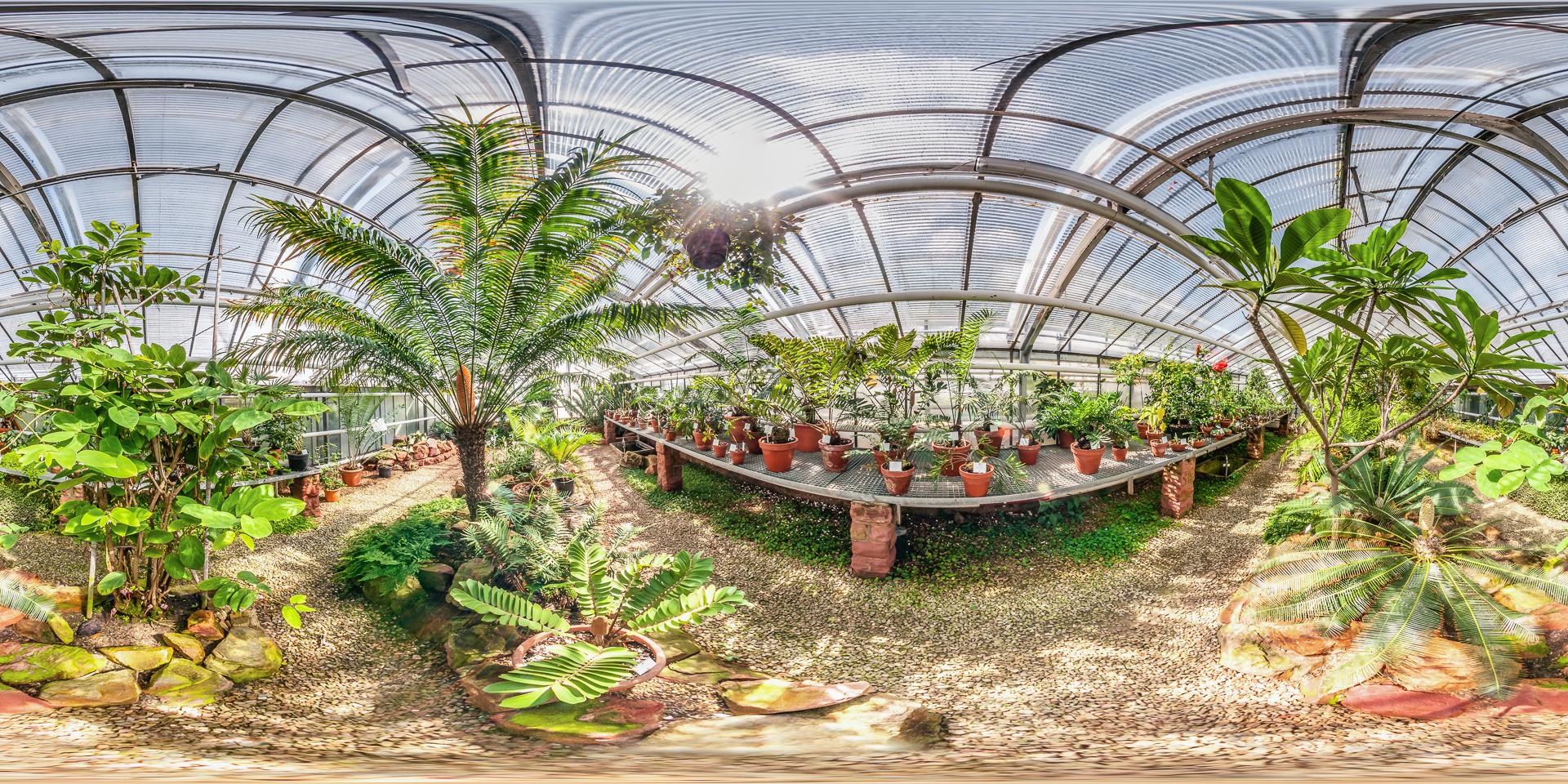 Botanischer-Garten-Mainz-Cycadeenhaus
