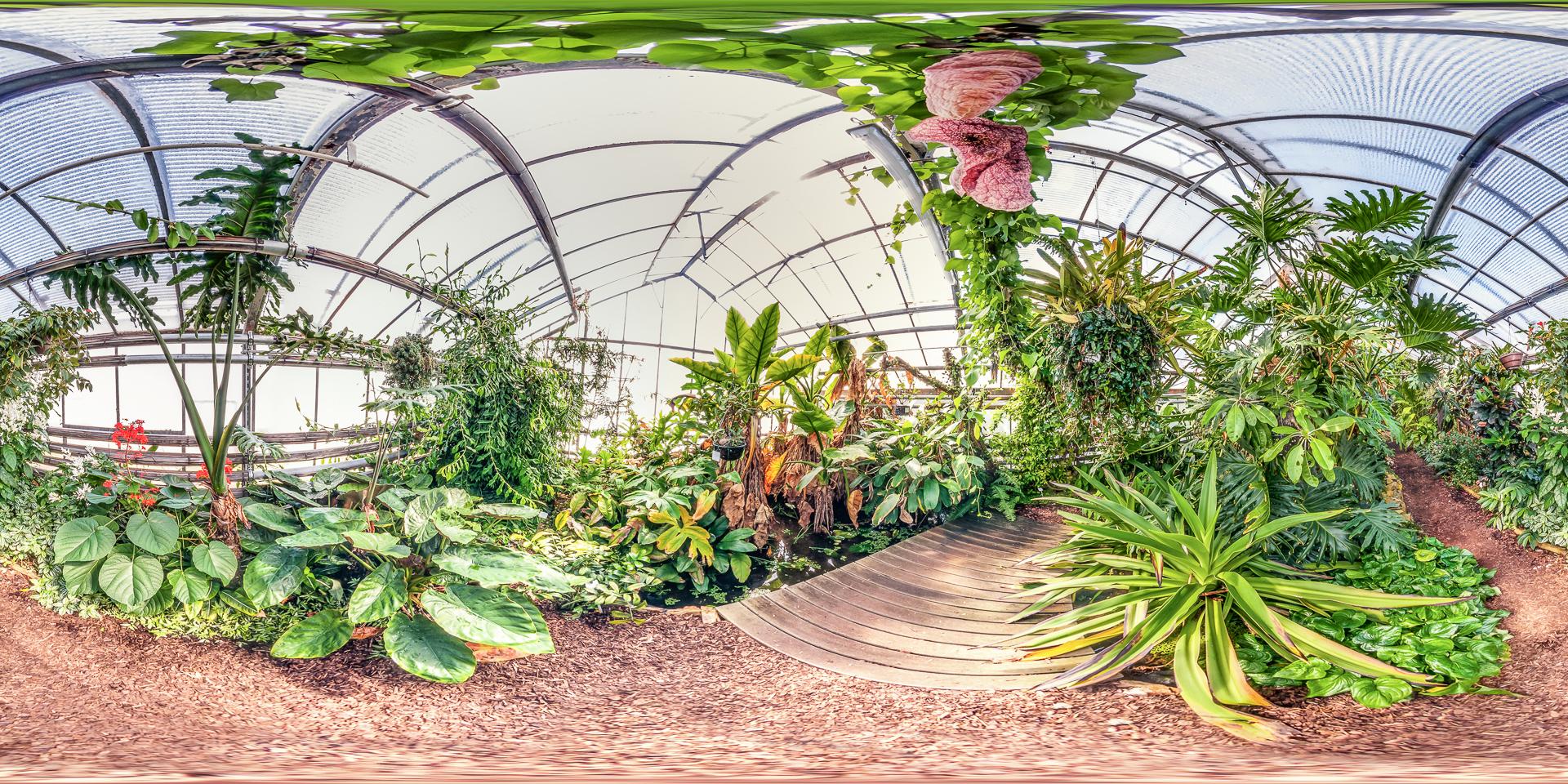 Botanischer-Garten-Mainz-Wasserpflanzen