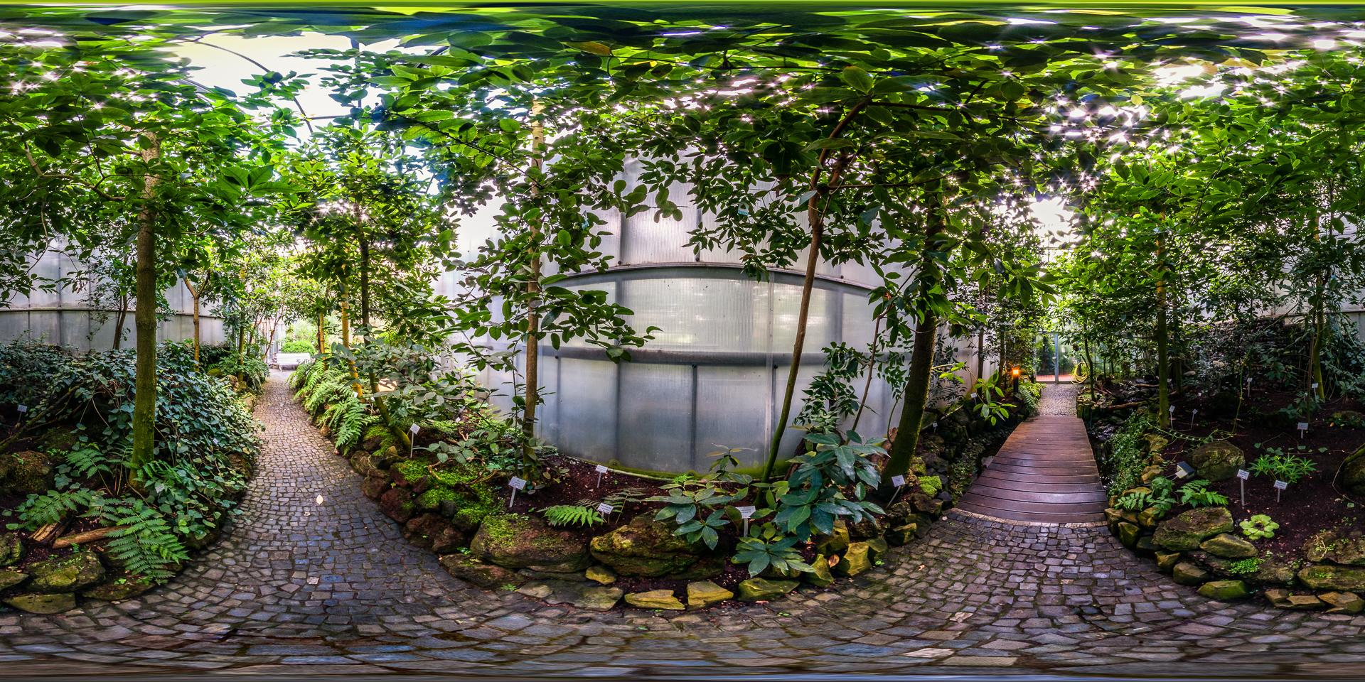 Botanischer-Garten-Marburg-Lorbeerwald
