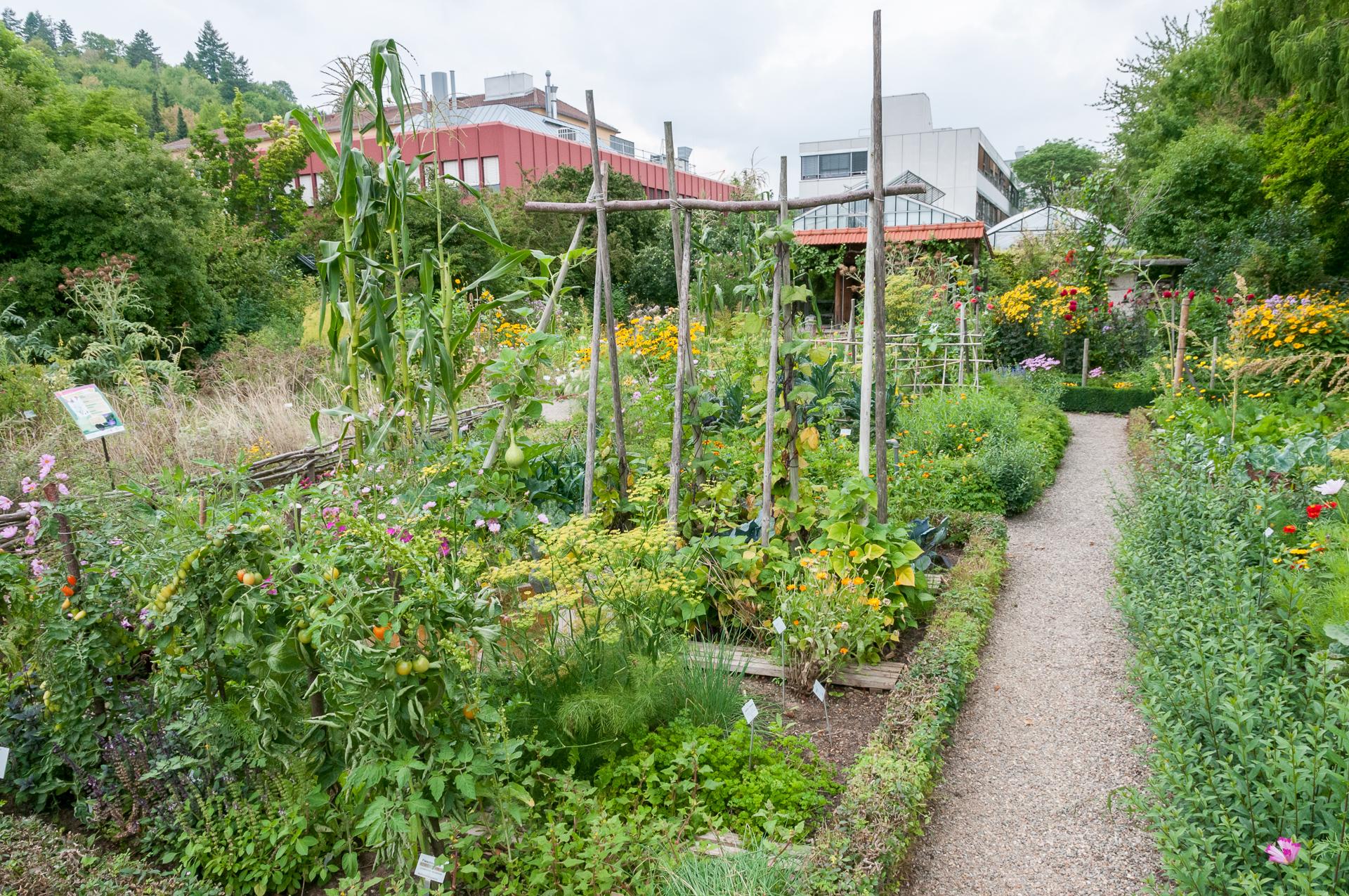 Botanischer-Garten-Wuerzburg-Bauerngarten