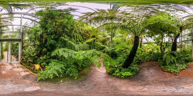 Botanischer-Garten-Wuerzburg-Bergnebelwald