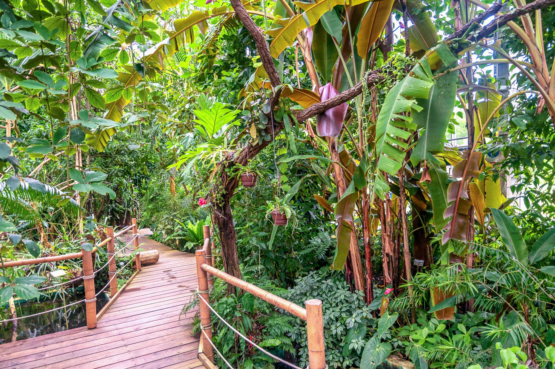Botanischer-Garten-Wuerzburg-Tieflandregenwald