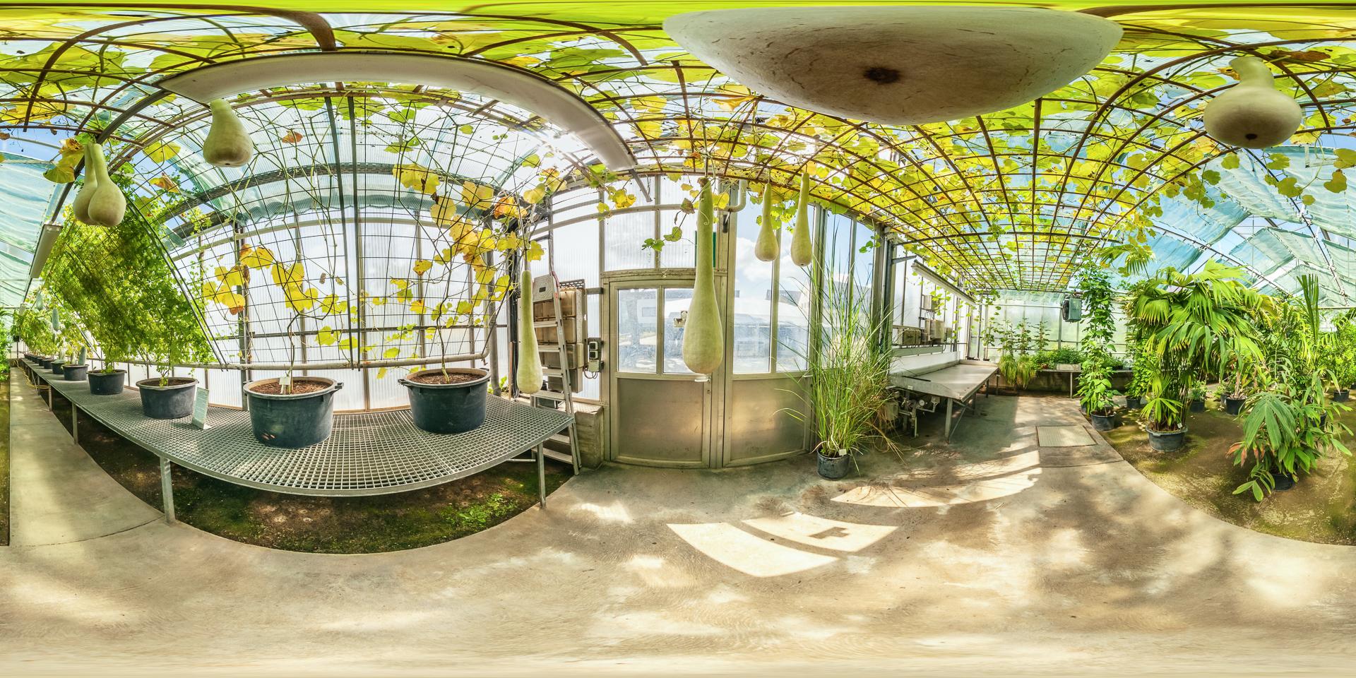 Gewaechshaus-Tropische-Nutzpflanzen