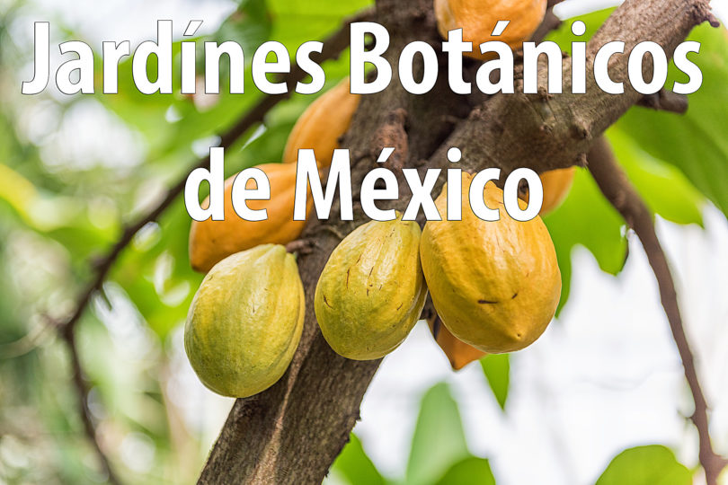 Jardínes Botánicos de México