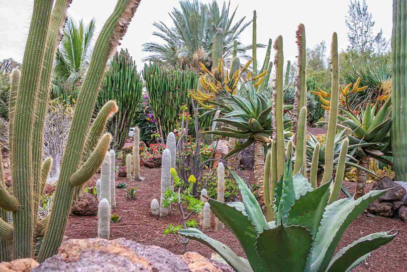 La Lajita Oasis Park