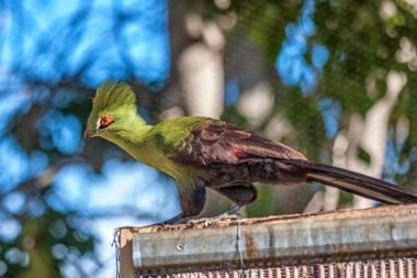 Parque de aves en El Paso/Los Llanos en la isla La Palma